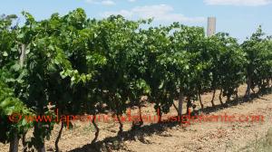 La commissione Attività produttive ha sentito in audizione i principali rappresentanti del comparto vitivinicolo regionale sulla possibile modifica del disciplinare di produzione dei vini Igt.