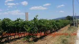 """L'assessorato dell'Agricoltura ha pubblicato il bando di attuazione della misura """"Investimenti"""" nel settore del vino."""
