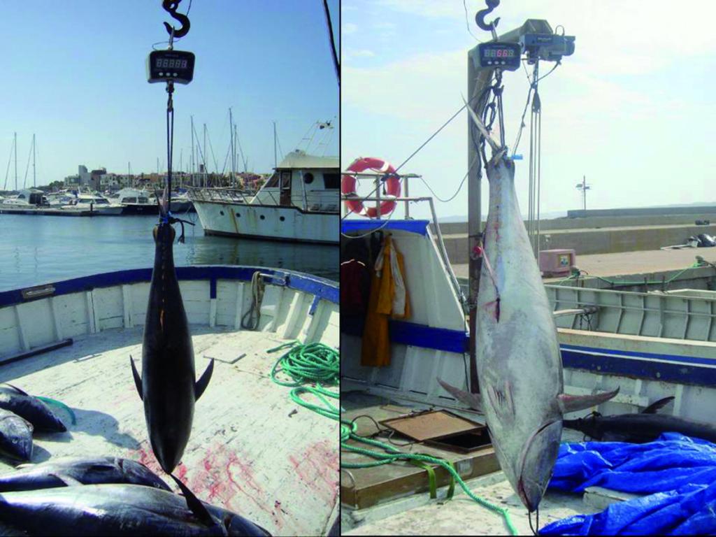Azioni di controllo della Guardia Costiera di Portoscuso per sconfiggere la pesca illegale del tonno rosso