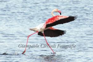 Il 24 marzo, a Villanova Monteleone, si terrà un workshop sul codice etico della fotografia naturalistica.