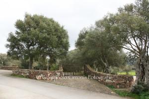 Ingresso Parco di San Leonardo Perdaxius copia