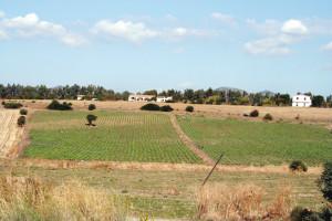 Inizia la prima fase del Piano Sulcis: 10 milioni di euro per l'agroalimentare.