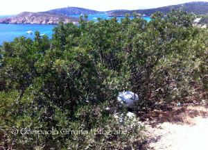 La Sardegna ha il mare più pulito ma sulle strade è emergenza ambientale per le discariche abusive.