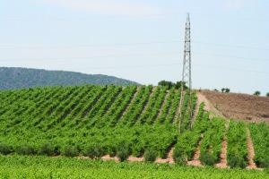 L'assessorato regionale dell'Agricoltura ha concesso l'aumento del titolo alcolometrico voluminico per la campagna viticola 2013/2014.
