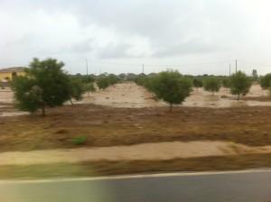 L'abbondante pioggia di ieri pomeriggio ha provocato danni anche nel Sulcis.