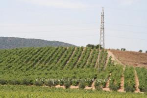 """L'assessorato dell'Agricoltura ha selezionato le aziende che parteciperanno alla manifestazione fieristica """"Vinitaly 2015""""."""