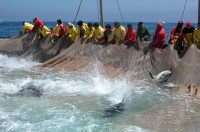 Dario Giagoni (Lega): «La piccola pesca sarda penalizzata per le quote tonno, il ministro Bellanova dia risposte»