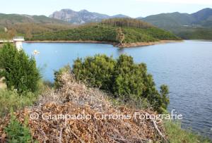 Il Partito dei Sardi, per ottimizzare l'uso delle risorse idriche, propone di ridurre le dotazioni alle colture agroindustriali.