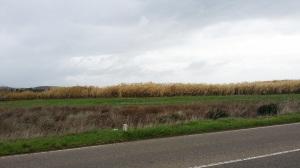 Quattro sindaci del Sulcis Iglesiente visitano oggi l'impianto di produzione di biofuel di Crescentino.