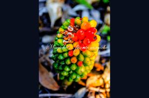 Il 17 e 18 maggio a Cannas di Sotto si terrà un'esposizione di piante spontanee della dottoressa Annarita Manca.