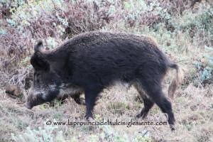 Gianluigi Rubiu (Udc) ha presentato una mozione in Consiglio regionale sulle zone di ripopolamento e cattura per la caccia.