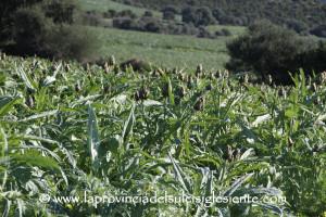 L'assessore dell'Agricoltura Falchi ad Agea: «I tempi dei pagamenti agricoli vanno rispettati».