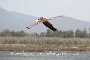 Il volo del fenicottero rosa.