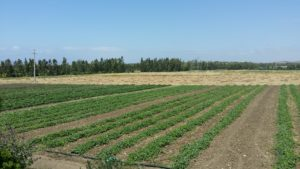 La Giunta regionale ha  deliberato gli aiuti per le aziende agricole finora escluse dai risarcimenti per l'alluvione del novembre 2013.