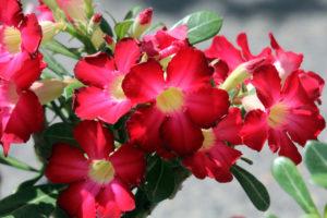 """Al via, nell'ambito della manifestazione """"Carbonia in fiore"""", il concorso fotografico """"Cattura il fiore""""."""