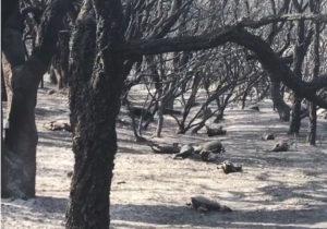 L'assessore regionale dell'Ambiente ieri pomeriggio ha fatto un sopralluogo ad Arbus e Gonnosfanadiga, nelle zone devastate dal fuoco.