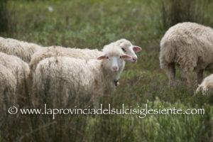 Claudio Atzori (presidente Legacoop Sardegna): «Con l'accordo di sabato, i pastori sardi, sostenuti nella loro battaglia dalla cooperazione sarda (anch'essa di pastori), hanno vinto una battaglia storica».