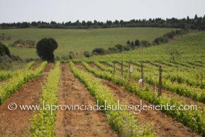 """Lunedì 15 luglio, a Sassari, si terrà l'evento di diffusione dei risultati relativi ai primi quindici mesi del progetto cluster """"Migliorvino""""."""
