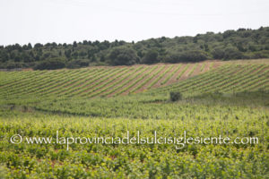 Gianluigi Rubiu (Udc): «Sarà una stagione da dimenticare per il comparto vitivinicolo ed orticolo del Sulcis Iglesiente».
