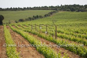 Sono 40 i vini sardi premiati al Vinitaly 2018 che andranno a rappresentare l'Isola nella prestigiosa guida 5Starwine.