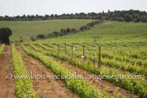 L'assessorato dell'Agricoltura ha aperto i termini per la presentazione delle domande di aiuto per la promozione del vino sui mercati dei paesi terzi.