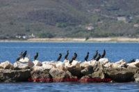 Dalla Regione 1 milione di euro agli enti locali per i danni alla fauna selvatica ed il censimento dei cormorani