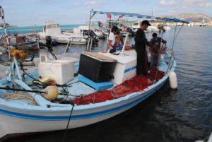 """Le problematiche della piccola pesca, con particolare riferimento ai danni causati dai delfini, sono state al centro della seduta odierna della commissione """"Attività produttive""""."""