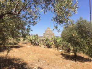 """Martedì verrà presentata la terza edizione della """"Camminata tra gli olivi"""", in programma domenica 27 ottobre in 13 """"Città dell'olio"""" della Sardegna."""