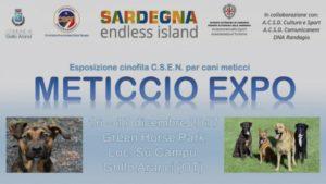 """Sabato 16 e domenica 17, nella struttura Green House Park di Golfo Aranci, si svolgerà """"Meticcio EXPO 2017"""", esposizione cinofila amatoriale rivolta ai cani senza pedigree."""