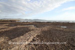 """Giovedì mattina la commissione Ambiente proseguirà l'esame della proposta di legge n. 15 """"Disposizioni sulla gestione della posidonia spiaggiata""""."""