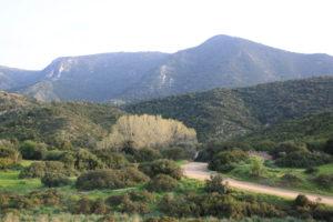Gianluigi Rubiu (Udc) lancia l'allarme sui problemi creati dalla processionaria all'integrità del patrimonio boschivo.