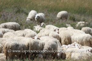 Mercoledi 1 agosto, a Ittiri, si terrà un incontro organizzato dalla Copagri Nord Sardegna, sul prezzo del latte di pecora e sul futuro dell'intero comparto Ovi-Caprino in Sardegna.