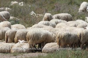 Sabato 29 giugno,a Ozieri, si svolgerà il convegno provinciale della Confederazione italiana agricoltori Nord Sardegna.