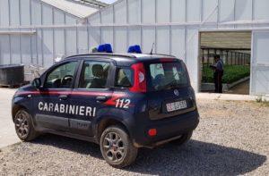 Un'azienda agricola di Decimoputzu è stata sanzionata con 18.000 euro per l'impiego di 6 braccianti privi di regolare assunzione e copertura previdenziale e assicurativa.