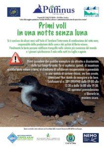 Il comune di Olbia e l'Area marina protetta di Tavolara chiedono l'aiuto dei cittadiniper il recupero dei piccoli esemplari di berta minore atterrati al suolo.