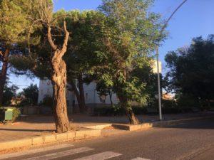 A Carbonia proseguono i lavori di manutenzione del verde pubblico eseguiti dalla So.Mi.Ca..
