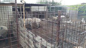 Sono stati individuati a Lotzorai e Girasole due allevamenti illegali di maiali, sanzionati i titolari.