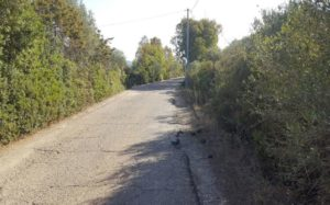 Sono iniziati i lavori di riqualificazione della strada Calasetta-Calalunga.