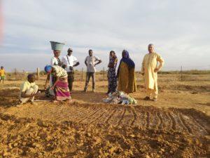 I tecnici dell'agenzia Forestas hanno portato a termine, nella regione di Matam, nel nord-est del Senegal, il primo ciclo di attività previste nell'accordo di cooperazione territoriale.