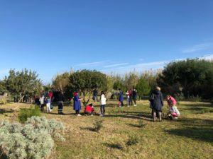 """Ritorna la """"Festa dell'albero"""" a Sant'Antioco, con il coinvolgimento delle scuole cittadine."""