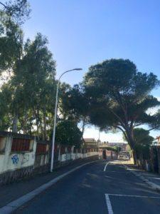 Giovedì mattina via Napoli verrà chiusa al traffico, a Carbonia, per consentire l'abbattimento di un albero pericolante.