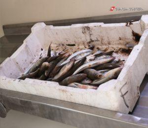 L'Ufficio Circondariale Marittimo di Portoscuso ha contestato una violazione delle norme in materia di etichettatura ad un venditore ambulante.