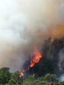 Il sindaco di Carloforte ha scritto al Prefetto di Cagliari, per renderlo partecipe del drammatico incendio che ieri ha devastato alcuni ettari di macchia mediterranea nell'Isola di San Pietro.