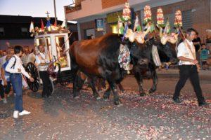 """La processione di Sant'Isidoro, """"Santu Gloriosu"""" di Teulada."""