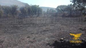 Elicotteri del Corpo forestale stanno intervenendo per spegnere incendi a Usellus e Ittiri.