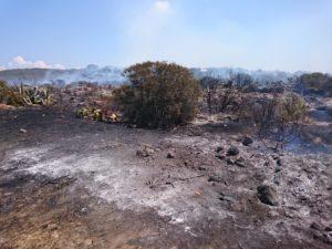 Si sono concluse alle 15.10 le operazioni di spegnimento dell'incendio sviluppatosi in località Gasparro-Spalmatore, nell'Isola di San Pietro.