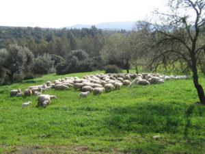 In Lombardia un concorso per 38 laureati in scienze agrario-forestali o zootecniche. Scadenza imminente.