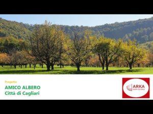 """""""Amico Albero"""", un progetto per la messa a dimora di alberi e piante nell'area metropolitana di Cagliari per sensibilizzare i giovani e le pubbliche amministrazioni."""