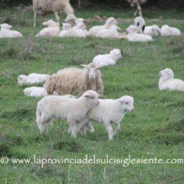 La Cia Sardegna chiede la riattivazione immediata dei tavoli di concertazione sul prezzo del latte