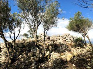 Prosegue il lavoro di sistemazione e pulizia dei principali siti nuragici di Sant'Antioco, operato dal Cammino Minerario di Santa Barbara